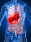 Обследование печени, печеночные пробы, гепатиты, цирроз, опухоли, гепатоз